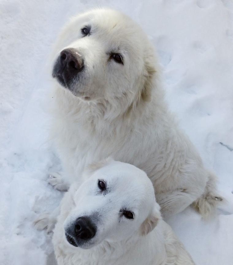 Nure & Taro